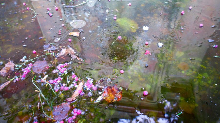 Berries on Frozen Pond
